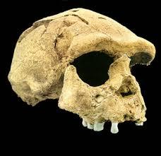 Fosil Manusia Purba