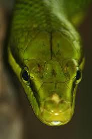 Rochers au Serpents