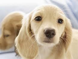 ◆精僻◆馴犬練習技巧