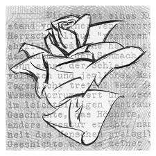 Logo%2520Rosa%2520Bianca%2520480x480 Cavalese, Admo e Advsp incontrano gli studenti della Rosa Bianca.