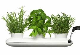 121907_herbs.jpg