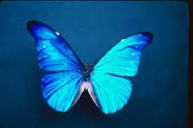 external image butterfly.jpg