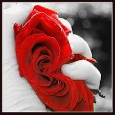 حمراء جميلة ..... 139994548de0b1a0b94m