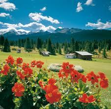 %name Predazzo   Bellamonte: Fiori, erbe e sapori   Quel mazzolin di fiori   Il prato nel piatto