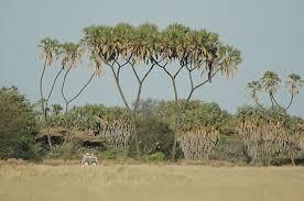 http://tbn2.google.com/images?q=tbn:LqRe926n5ov5fM:http://www.linternaute.com/voyager/interview/safari-kenya-ratel/diaporama/images/4.jpg