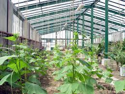 نحوه صدور مجوز احداث گلخانه