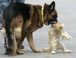 http://tbn2.google.com/images?q=tbn:g4y621ISsazb6M:http://shanx.com/av/dog-cat.jpg