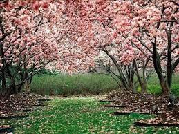 Dia de primavera