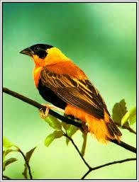 ������ ������� Bird%2010.jpg
