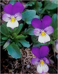 زهور.. الرومنسيه