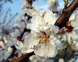 cursos de flores de bach